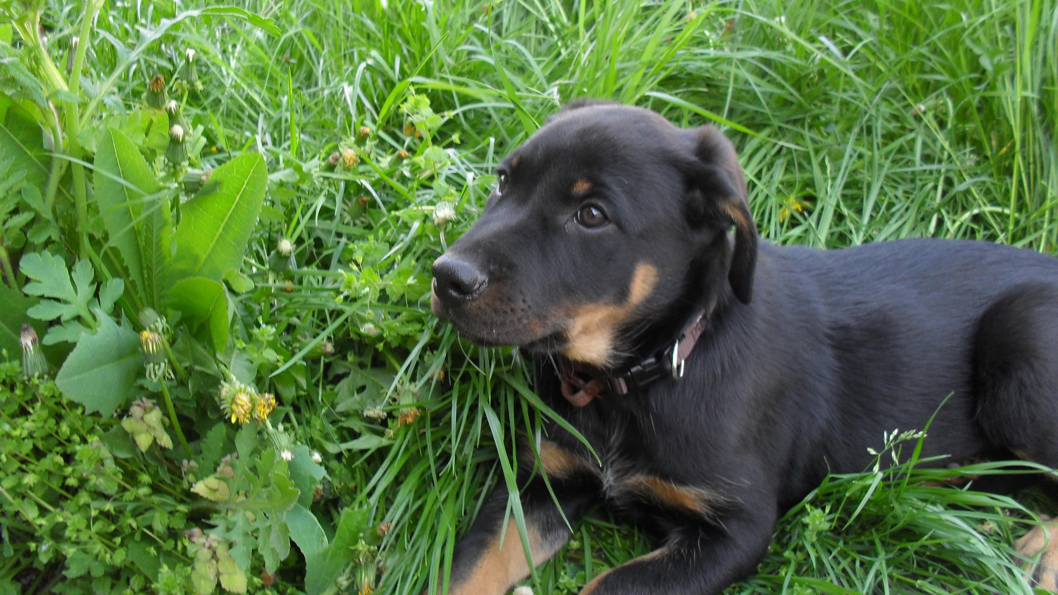 Mon chien Léon